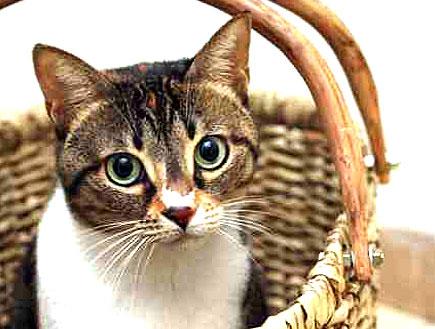 חתול בסלסלה