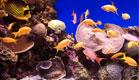 דגים ואלמוגים