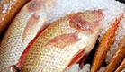 דגים ורדרדים בשוק