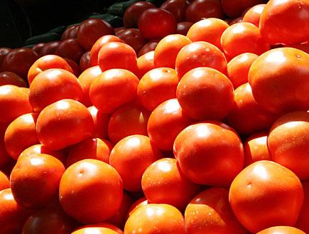 עגבניות בשוק (צילום: עודד קרני ,mako)