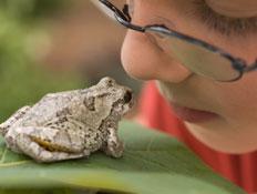 צפרדע וילד עם משקפיים