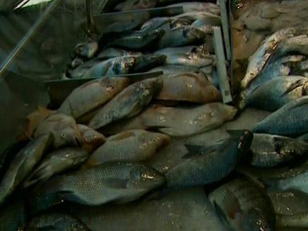 הדגים הוזלו - המחיר לצרכן נשאר (צילום: חדשות2)