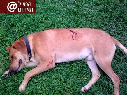 כלב שנדקר למוות בשדרות (צילום: משפחת פרנקו)