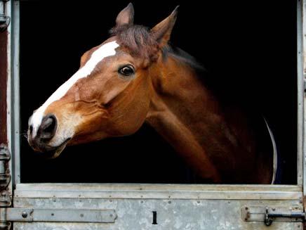 בן 15 נפצע קשה כשרכב על סוס. ארכיון (צילום: אימג'בנק - gettyimages)