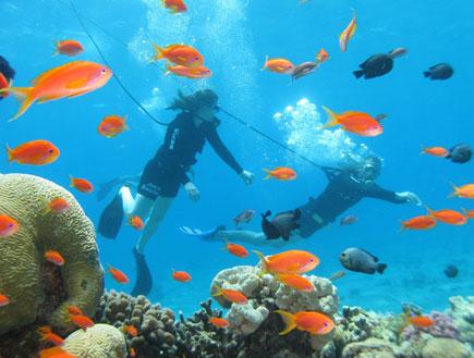 אטרקציות באילת: דגים וצוללנים