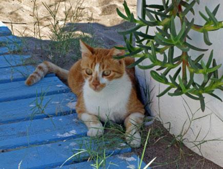 חתול בחוף פליראקי
