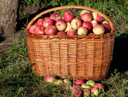 פינק ליידי 2 - תפוחים