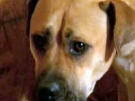 נטש את כלבתו וצפוי למאסר (צילום: אמ. אס. אן. בי. סי.)