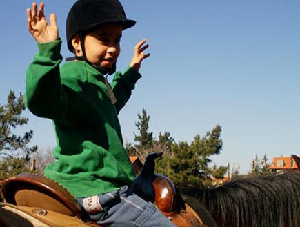 סוסים מרום גולן (צילום: שירלי אהרון)