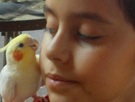 ילד עם תוכי חוות התוכים כפר הס (צילום: שירלי אהרון)
