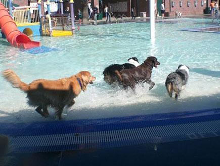 כלבים בפארק מים קליפורניה (צילום: האתר הרשמי)
