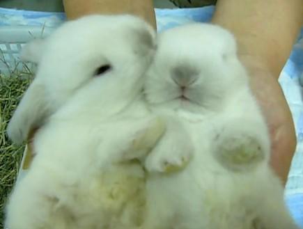 bunnies (צילום: צילום מסך)