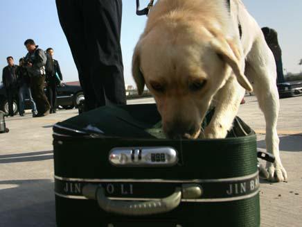 מזוודה חשודה. ארכיון (צילום: רויטרס)