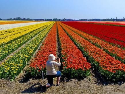 שדות צבעונים