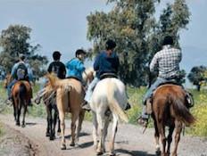 טיול סוסים-געש של פריחה