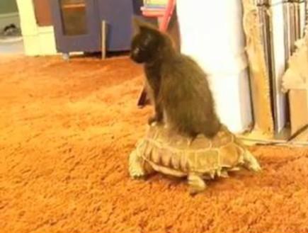 חתול וצב (צילום: צילום מסך)