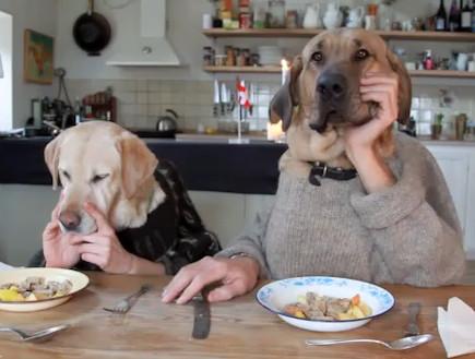 זוג כלבים רעבים סועדים במזנון. בונפטיט...
