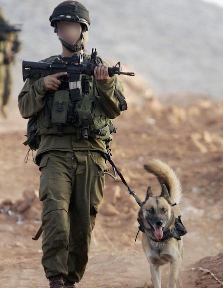 חייל עם כלב (צילום: getty images ,getty images)