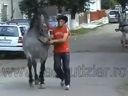 למה לא כדאי לעצבן סוס מאחור