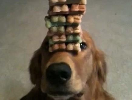 כלב אוחז ביסקוויטים (צילום: צילום מסך)