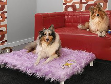 מלון בוטיק לכלבים (צילום: צילום מסך)