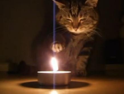 חתולה משחקת באש (צילום: צילום מסך)