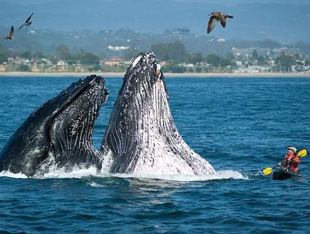 לווייתן (צילום: צילום מסך)
