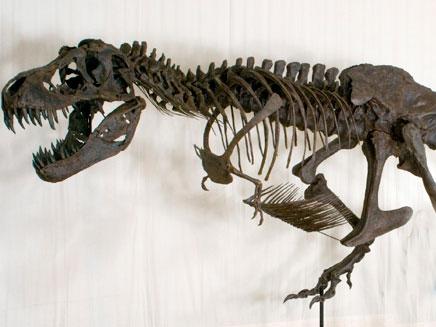 דינוזאור. ארכיון (צילום: AP)