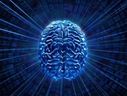מוח (צילום: istockphoto)