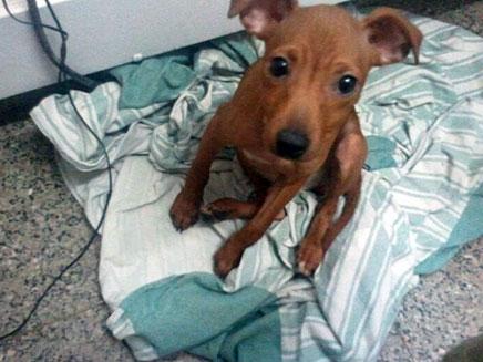 גור הכלבים שניצל (צילום: תנו לחיות לחיות)