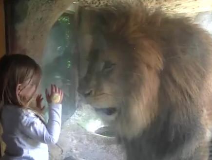 ילדה ואריה (צילום: מתוך youtube)