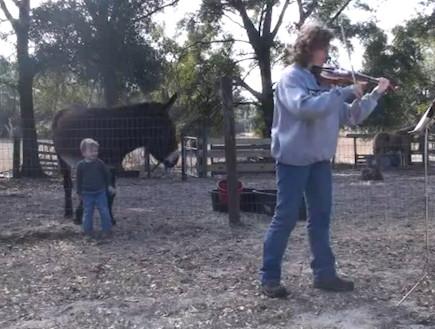קונצ'רטו לכינור וחמור