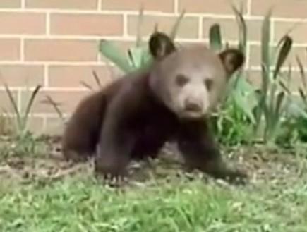 חיות מתעטשות (צילום: מתוך youtube)