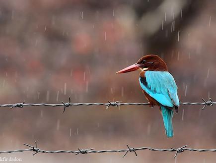 ציפור (צילום: כפיר דדון) (צילום: כפיר דדון)
