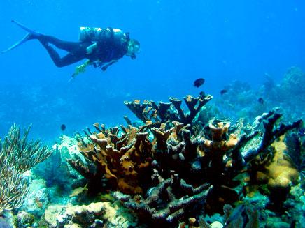 שונית אלמוגים. ארכיון (צילום: רויטרס)