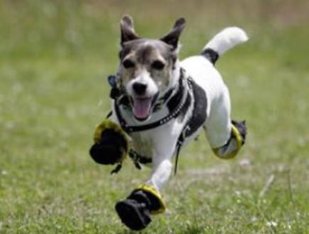 הכלב במגפיים(צילום מסך)