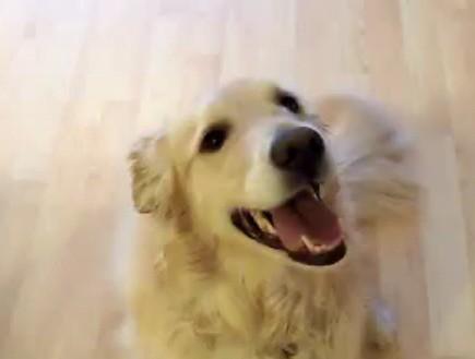 כלב מנקה את הבית (צילום: מתוך youtube)