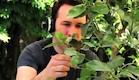 מוזיקת טבע (צילום: מתוך youtube)