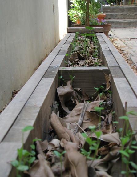 גינה ירוקה. ארגז ארוך שהוסב לעציץ