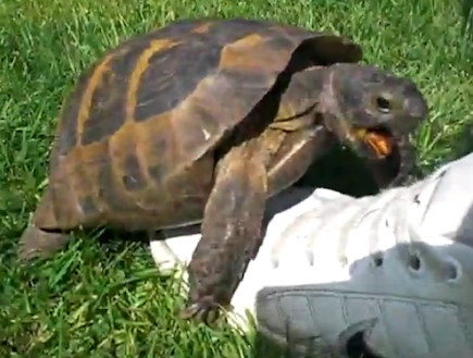 turtle making love to a shoe