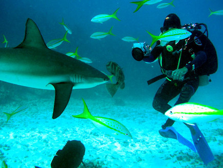 צלילים עם כרישים (צילום: לין ממרן ,יחסי ציבור)