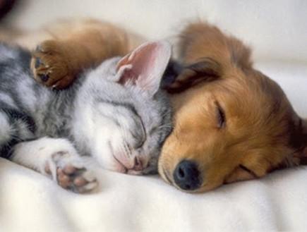 כלבים וחתולים ישנים (צילום: kittenspuppiesandcupcakes.com)