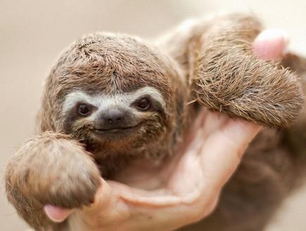 חיות חמודות (צילום: buzzfeed.com)