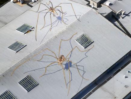 עכבישי ענק על הגג (צילום: thisiscolossal.com ,mako)
