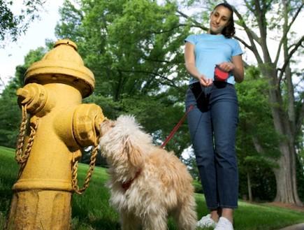 הכלב של המדינה מדור 4 (צילום: אימג'בנק / Thinkstock)