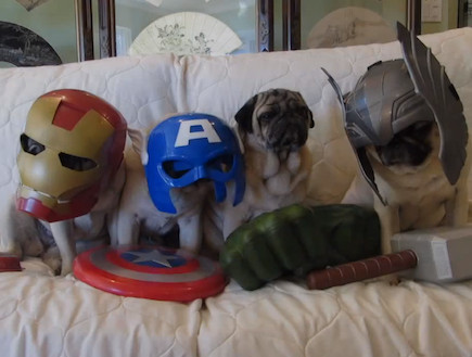 the avengers dogs