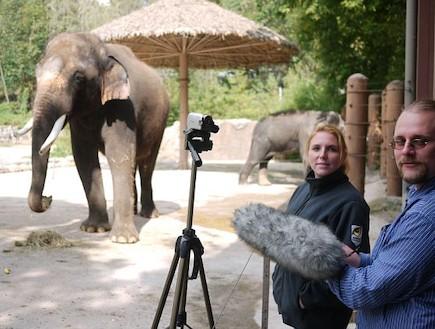 קושיק הפיל המדבר (צילום: dailymail.co.uk)