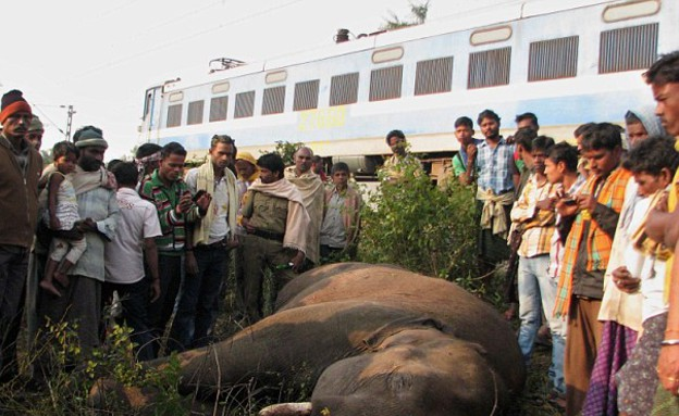פילים נדרסו בהודו