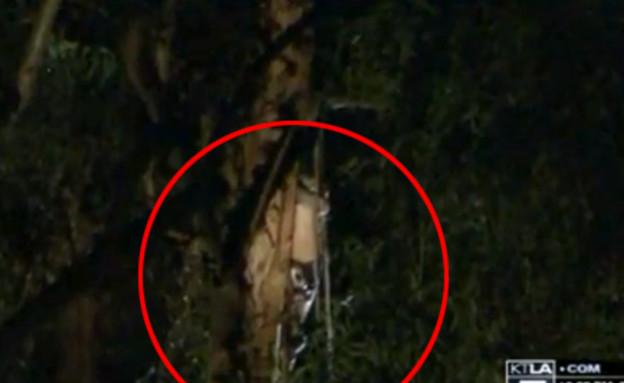 הגנן התלוי על עץ (צילום: יוטיוב )