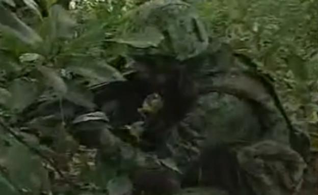 חייל מסווה בג'ונגל (צילום: יוטיוב )